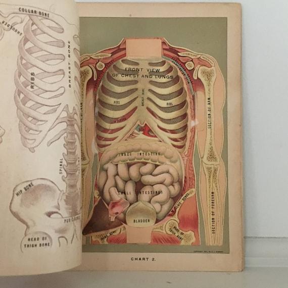 c. 1903 Antik Anatomie interaktive medizinische Lithographie | Etsy