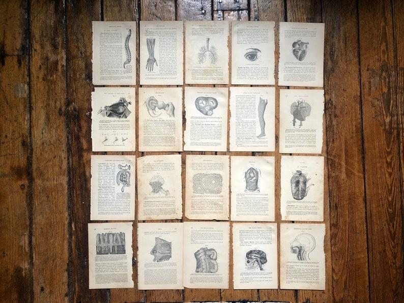 c. 1884 HUMAN ANATOMY PRINTS  set of 20 original antique image 0