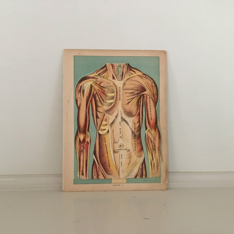 c. 1920 menschliche Anatomie drucken interaktive | Etsy