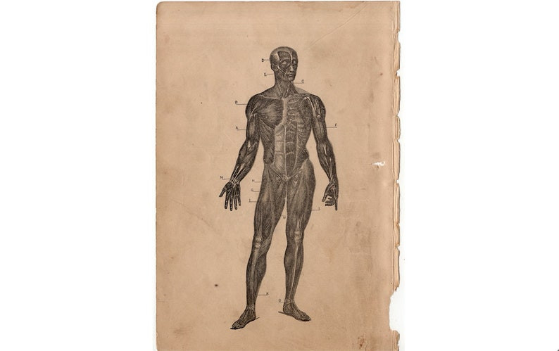 c. 1884 MUSCULAR SYSTEM lithograph  antique human anatomy image 0