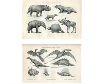 c. 1894 - FOSSILS OF DINOSAURS - original antique prints - prehistoric extinct animals - stegosaurus triceratops Jurassic Period - set of 2