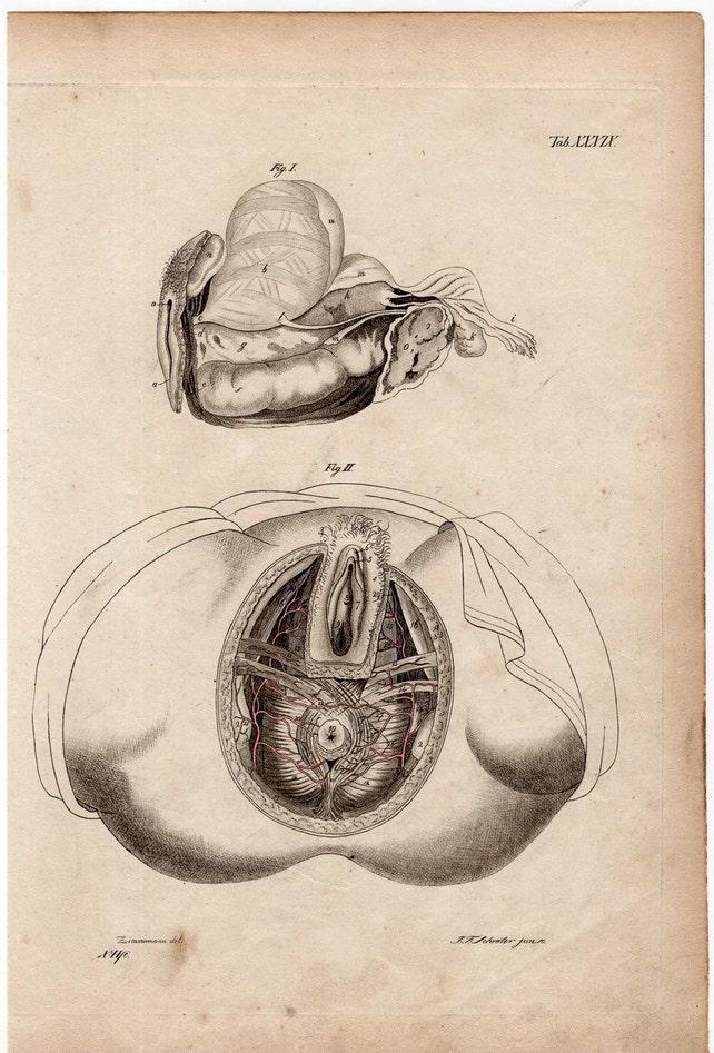 1820 Human Anatomy Female Pelvis Original Antique Medical Etsy