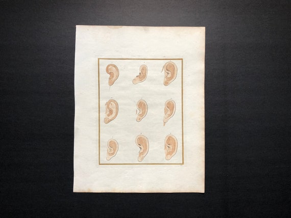 c. 1774 Ohr Anatomie Gravur original-Antik-Druck antike | Etsy