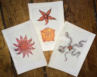 c. 1907 set of 3 sea life prints - the sea shore original antique sea life ocean print - starfish seastars