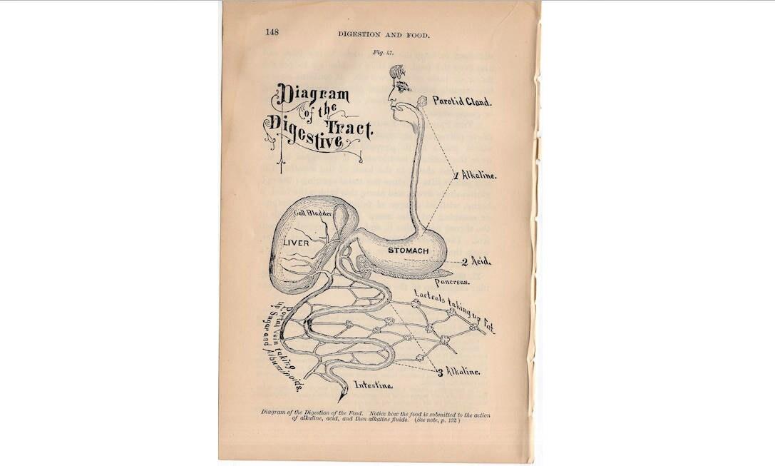 c. 1884 menschliche Anatomie drucken Magen und Darm Leber | Etsy