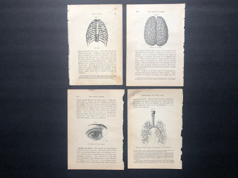 c. 1884 HUMAN ANATOMY PRINTS  set of 4 original antique image 0