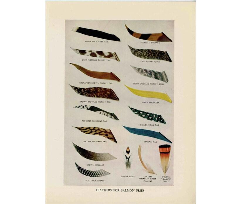 1970 drucken binden fliegen Federn für Lachs fliegen Angeln   Etsy