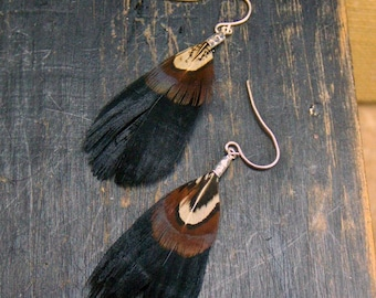 The Mountain Blackeye Feather Earrings.  Black and brown mottled feathers and sterling silver earrings