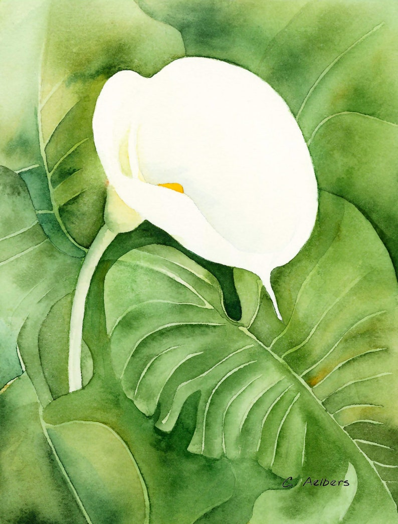 Instant Download 10x8 White Calla Lily Flower Art Printable Etsy