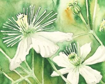 White Clematis Original Watercolor Painting