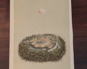 Antique Print Nest and Egg - Morris - Great Tit