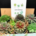Succulent Gift Box in silver pails, succulent thank you gift box, realtor gift basket,  succulent housewarming, succulent birthday box