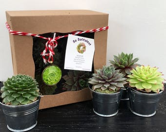 Christmas Succulent Gift.Succulent Gift Box With Card Of Your Choice Succulent Etsy