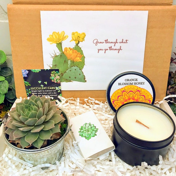 Gifts that Grow Succulent Care Package Friend Succulent Gift Box Break Up Gift Grow Through What You Go Through Succulent Gifts