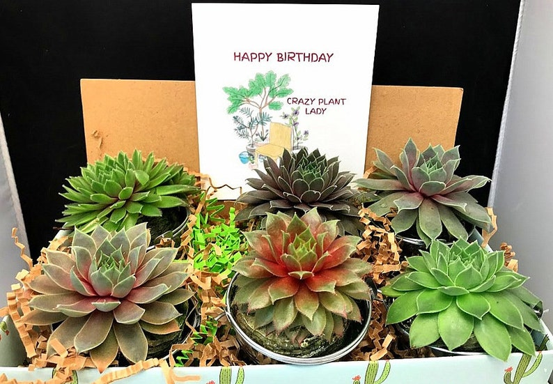 HAPPY BIRTHDAY Succulent Gift Box in silver pails succulent image 0