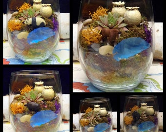 Succulent and Moss Terrarium, Choose your Desktop Buddy