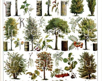 vintage french illustration forest trees digital download learning board