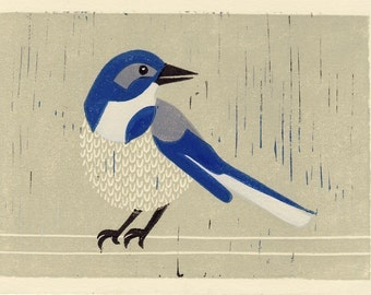 WESTERN SCRUBJAY -  Original Hand-Pulled Linocut Art Block Print 5 x 7, Blue, Gray, Bird