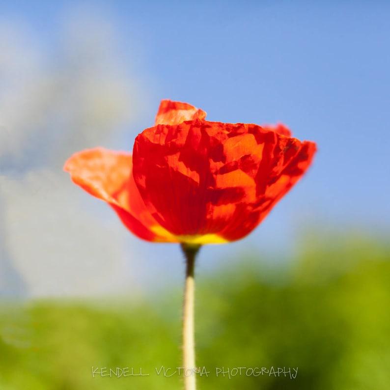 Bright Orange Poppy on Blue Sky Background Wall Art Home image 0