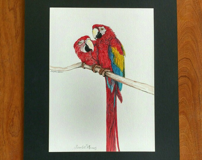 SCARLET MACAW Original Bird Painting in Watercolor on Cotton Paper by Susana Caban, Bird Art, Tropical Home Decor, Nature Art, Red Bird Art