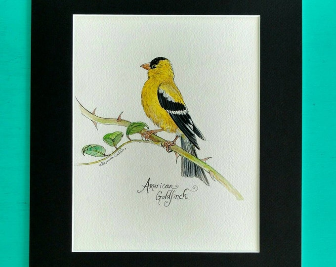 AMERICAN GOLDFINCH BIRD, Original Watercolor Painting on Paper by Susana Caban, Yellow Bird Art, Nature Study, Home Decor, Art and Design