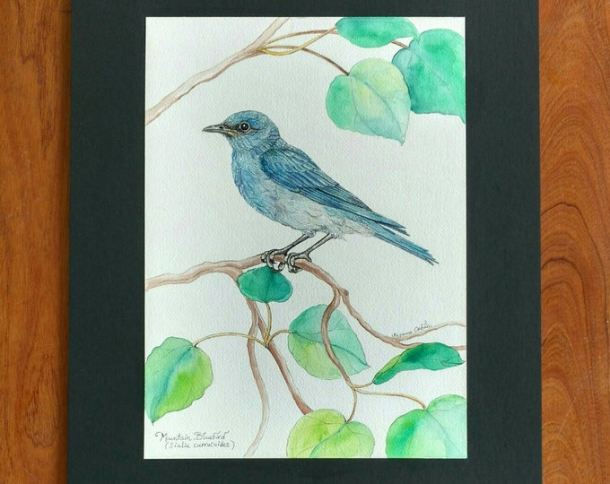 MOUNTAIN BLUE BIRD, Original Bird Painting in Watercolor on Cotton Paper by Susana Caban, Bird Art, Nature Study, Home Decor, Blue Bird Art