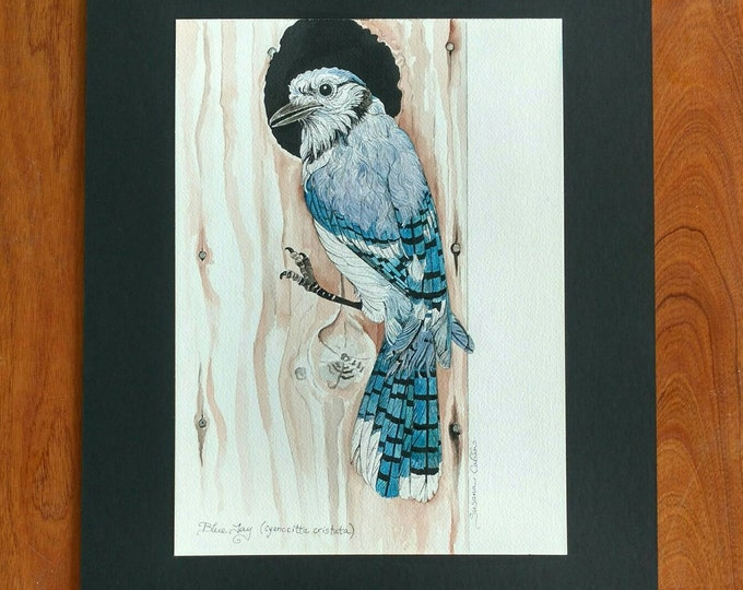 BLUE JAY Original Bird Painting in Watercolor on Cotton Paper by Susana Caban, Home Decor, Nature Study, Blue Bird Art and Design