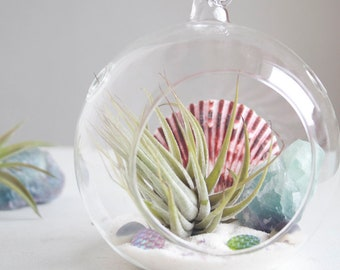 Air Plant Terrarium Kit, Mermaid Decor, Fluorite Crystal and Seashells, Beach Cottage Style, Purple and Green, Gift for Her Under 30