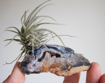 Gift For Outdoor Lover, Tiny Air Plant on Agate Geode, Crystal Garden, Little Something, Fall Decor, Natural Boho Decor