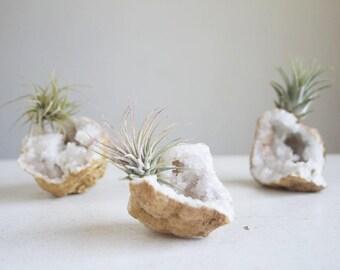 Air Plant Crystal Display, Little Calcite Geode, Miniature Sparkling Crystal Garden, Boho Decor, Unisex Gift, Wedding Favor