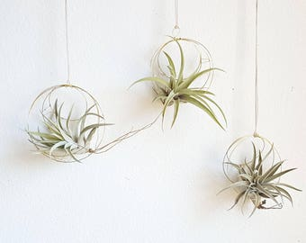 Geometric Hanging Air Plant Holder Set, Airplant Hangers, Moon Inspired Wall Decor, Himmeli, Gift For Plant Lover, Mom, Free Gift Boxes