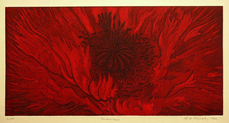 Turkenlouis  original etching of  an oriental poppy  Fine image 0