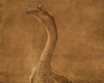 The Chinese Goose