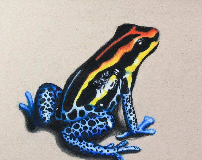 Poison Dart Frog Original Pastel Drawing