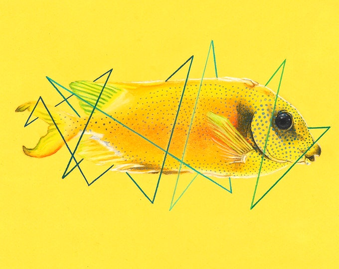 Blue Spotted Spinefoot Fish Original Drawing