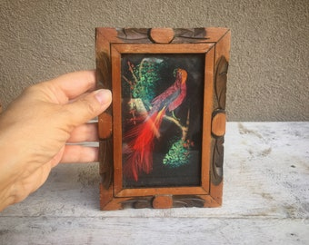 Small Framed 5x7 Mexican Feather Art Red Bird Arteplumeria, Real Feather Painting, Mexican Decor