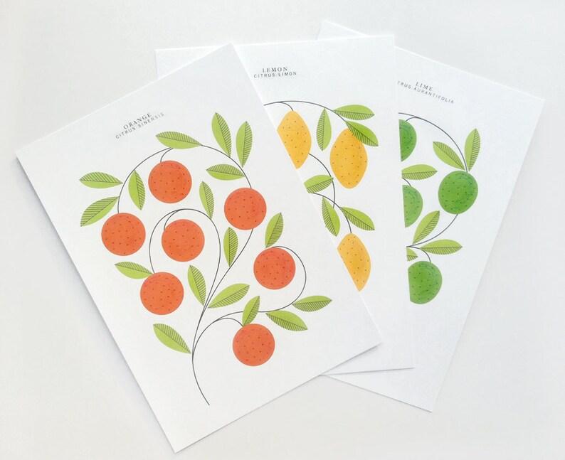 Citrus Print Set image 0