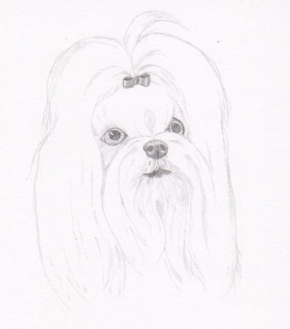 Maltese Signed Personalized Original Pencil Drawing Matted Etsy