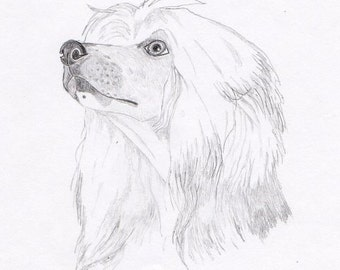 Chinese Crested Powder Puff Signed Personalized Original Pencil Drawing Matted Print -Free Shipping- Desert Impressions