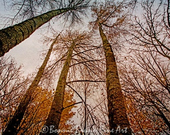 River Trees Lustre Print - treetops nature oregon forest, landscape, sky