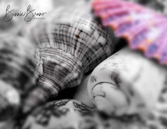 Color Splash Nature Photography Bw Shells With One Pink