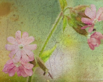 Floral Grunge 8x10 Photo Art Print - dusky rose shabby chic chartreuse - affordable home decor