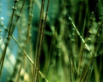 Grasses Along a Pond 20x20 Contemporary Art Print