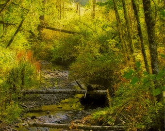 Forest Bridge 8x10 Fine Art Photo Print - morning forest - woodland art - affordable home decor