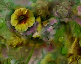 Sweet Dreams Fine Art Giclee Print, floral decor, flower montage, photo art
