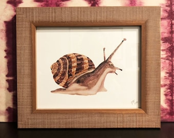 Snail Framed Signed Watercolor Print