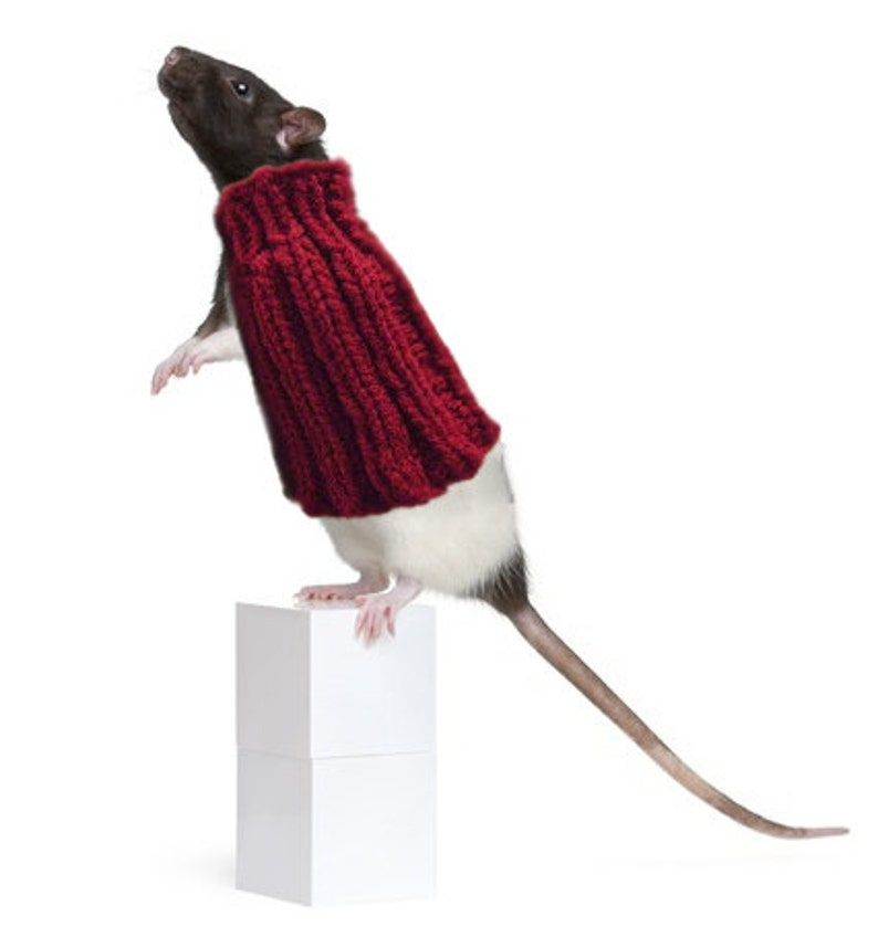 Pet Rat Sweater Cozy Unique Extra Stretchy One-Size-Fits-Most image 0