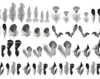 Feather Decals, Part 3, Decals for Enamel, Image Transfer, Ceramics, Decals, Waterslide Decals,  Enamel Surface Design, Painting with Fire
