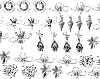 Floral Decals for Enamel, Ceramics, or Glass