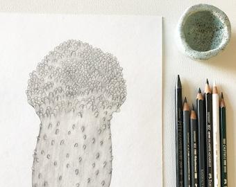 Fungi / original pencil mushroom drawing on paper / 18x24 cm / signed / chiba